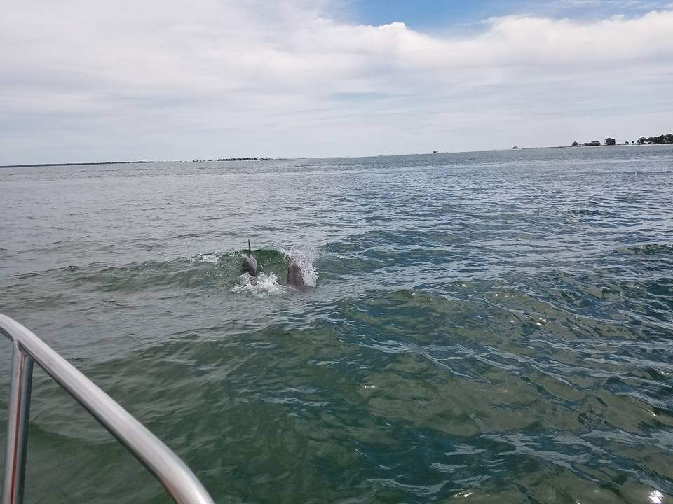 Dolphins in the Saint George Sound